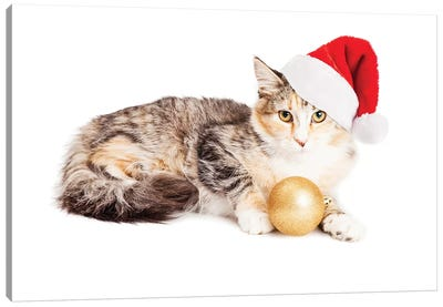 Cute Christmas Calico Kitten Canvas Art Print