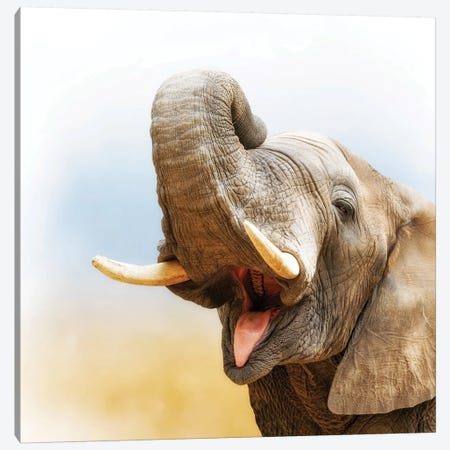African Elephant Closeup With Pastel Background Canvas Print #SMZ5} by Susan Schmitz Canvas Art Print