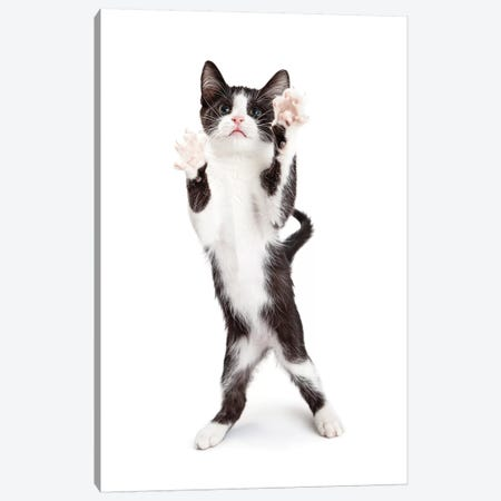 Cute Playful Kitten With Paws Up In The Air Canvas Print #SMZ62} by Susan Schmitz Canvas Artwork