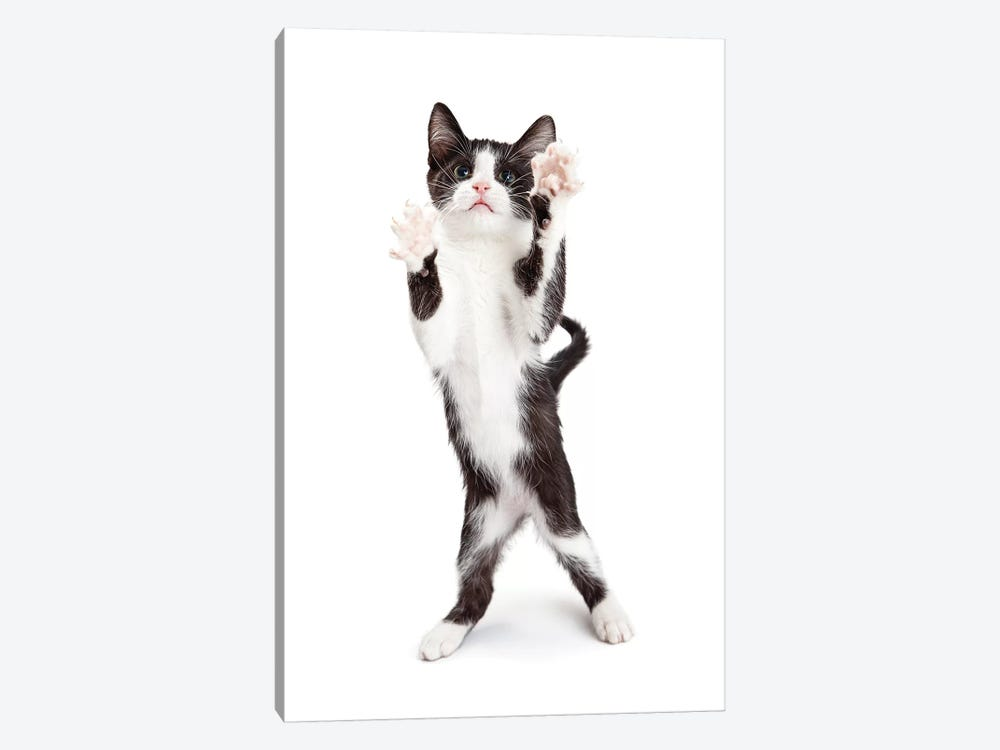 Cute Playful Kitten With Paws Up In The Air by Susan Schmitz 1-piece Canvas Wall Art