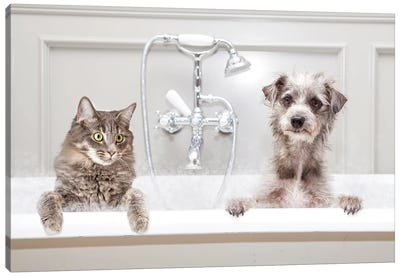 Dog And Cat In Bathtub Together Canvas Art Print