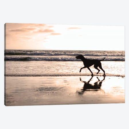 Dog Running On Beach At Sunset Canvas Print #SMZ64} by Susan Schmitz Canvas Art Print