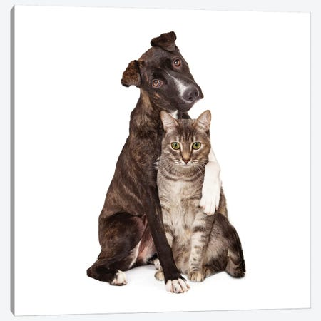 Dog With Arm Around Cat Canvas Print #SMZ65} by Susan Schmitz Canvas Art Print