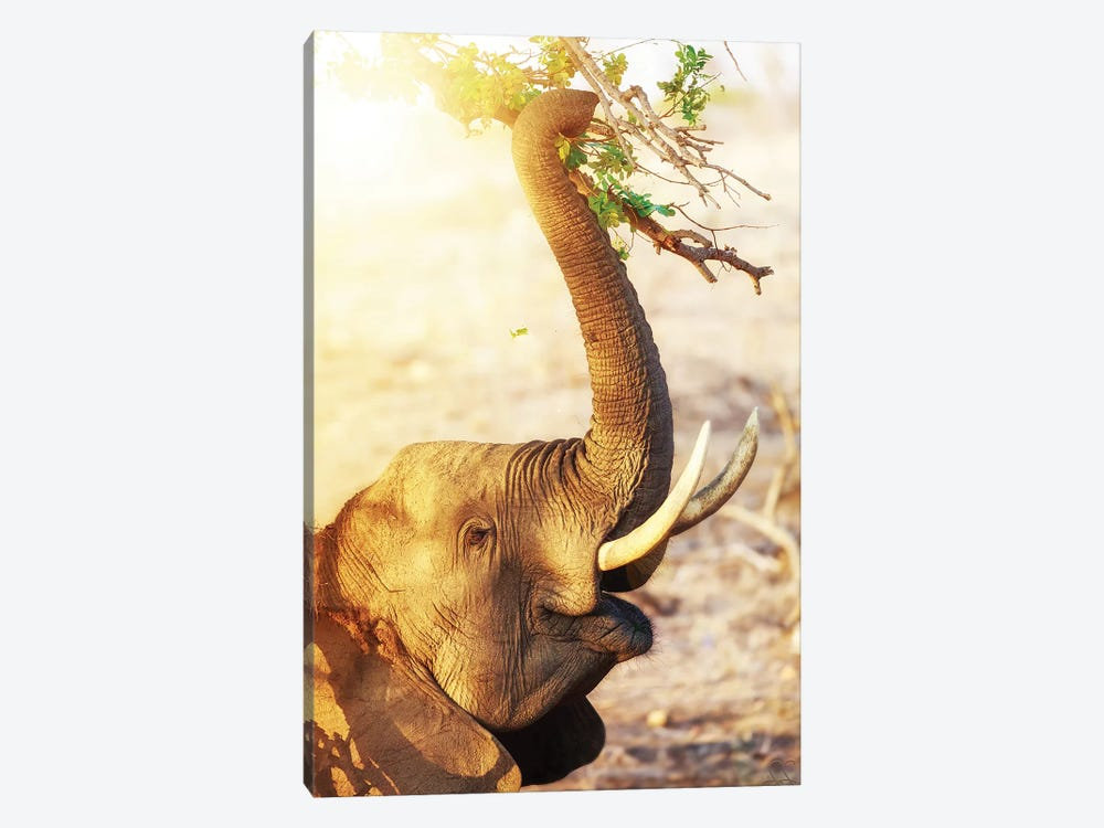 Elephant Eating At Sunrise by Susan Schmitz 1-piece Canvas Print