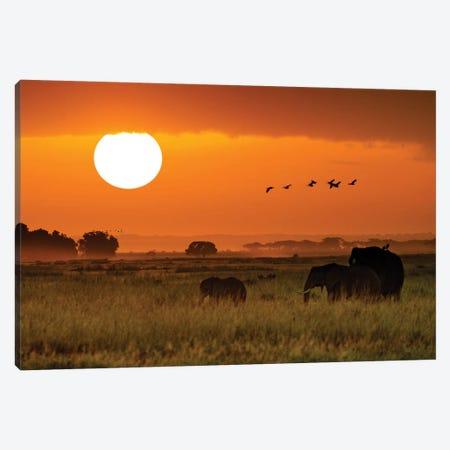 African Elephants Walking At Golden Sunrise II Canvas Print #SMZ6} by Susan Schmitz Art Print