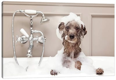 Funny Dog Taking Bubble Bath Canvas Art Print