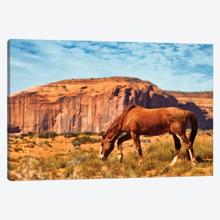 Horse In Utah Desert Canvas Print #SMZ83} by Susan Schmitz Canvas Wall Art