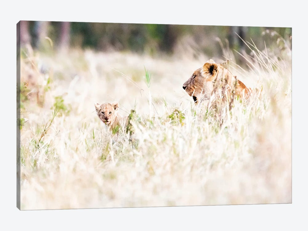 Lioness With Baby Cub In Grasslands by Susan Schmitz 1-piece Canvas Artwork
