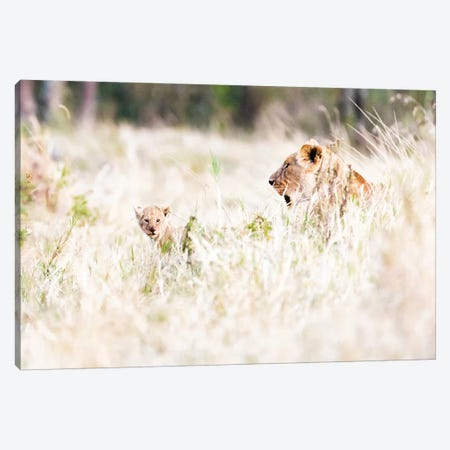 Lioness With Baby Cub In Grasslands Canvas Print #SMZ93} by Susan Schmitz Canvas Print