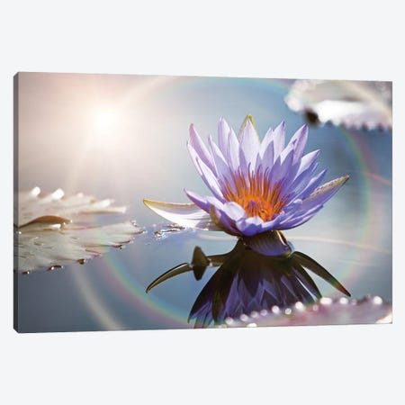Lotus Flower With Sun Flare Canvas Print #SMZ96} by Susan Schmitz Canvas Art