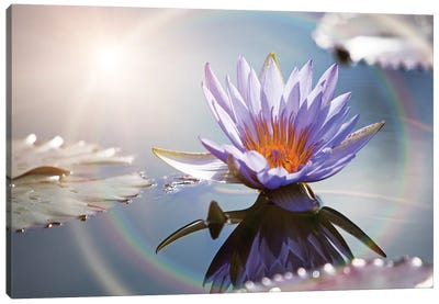 Lotus Flower With Sun Flare Canvas Art Print