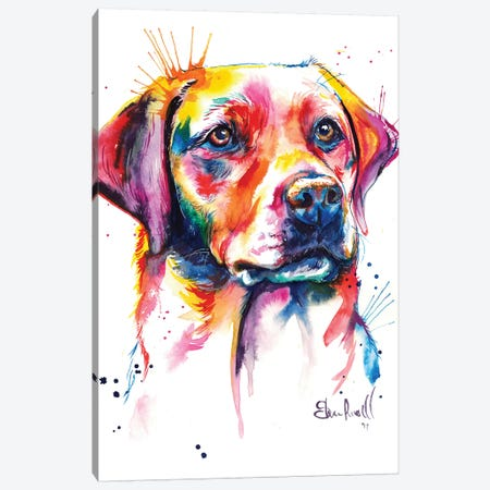 Yellow Lab I Canvas Print #SNA26} by Weekday Best Canvas Art