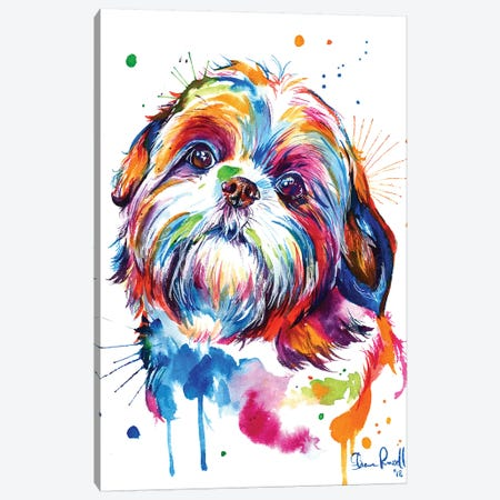 Shih Tzu Canvas Print #SNA38} by Weekday Best Canvas Art