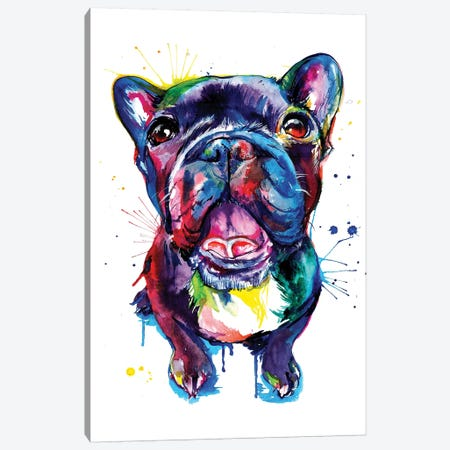 Black Frenchie Canvas Print #SNA3} by Weekday Best Canvas Print