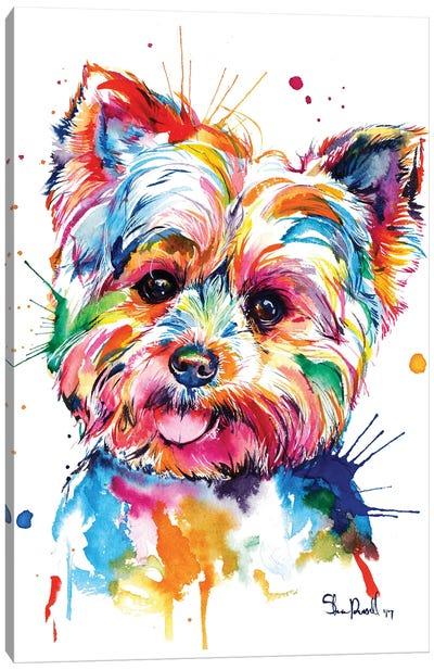 Yorkie Canvas Art Print