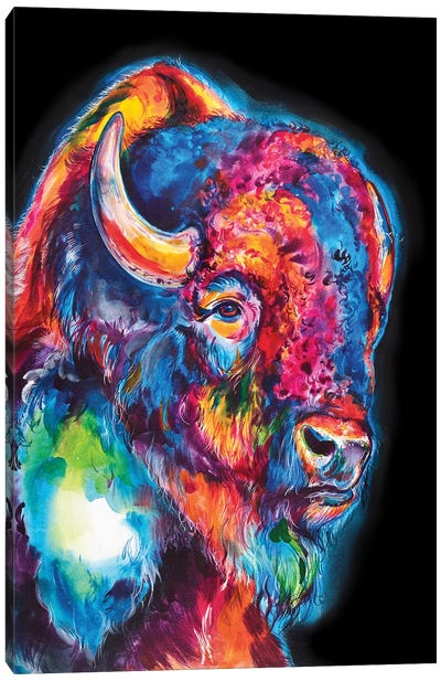 Buffalo On Black Canvas Art Print