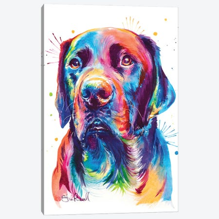 Chocolate Lab Canvas Print #SNA57} by Weekday Best Canvas Print
