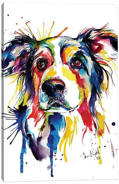 Border Collie Canvas Art Print