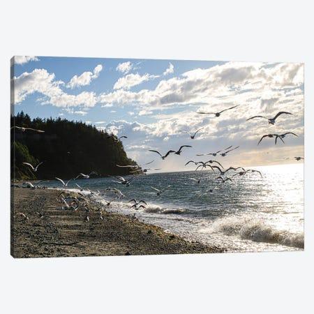Fort Worden State Park, Post Townsend, Washington State. Flock of seagulls on the coast beach. Canvas Print #SND21} by Jolly Sienda Canvas Artwork