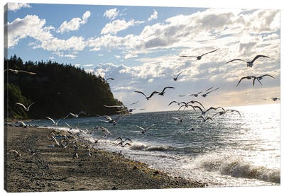 Fort Worden State Park, Post Townsend, Washington State. Flock of seagulls on the coast beach. Canvas Art Print