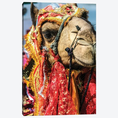 Udaipur, Rajasthan, India. India decorated Camel, Diwali Festival of Lights Canvas Print #SND6} by Jolly Sienda Canvas Print