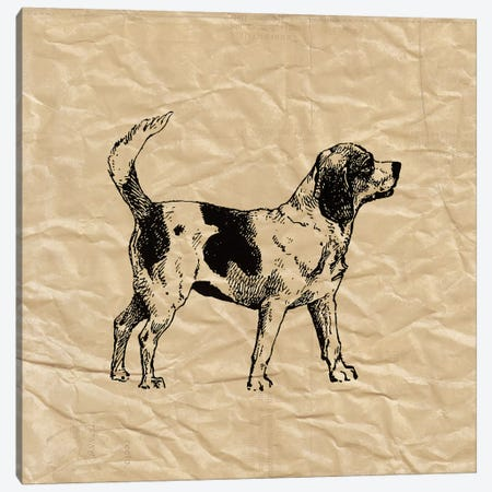 Beagle Canvas Print #SNE1} by Sabine Berg Canvas Art Print