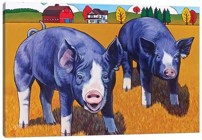 Big Pigs Canvas Art Print