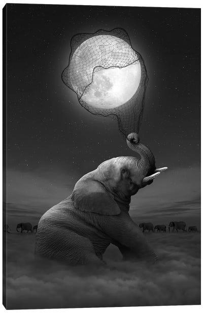 Elephant - Moon Catcher Canvas Art Print