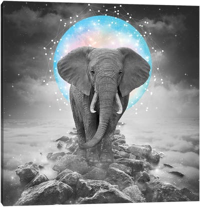 Elephant - On Rocks Color Moon Canvas Art Print