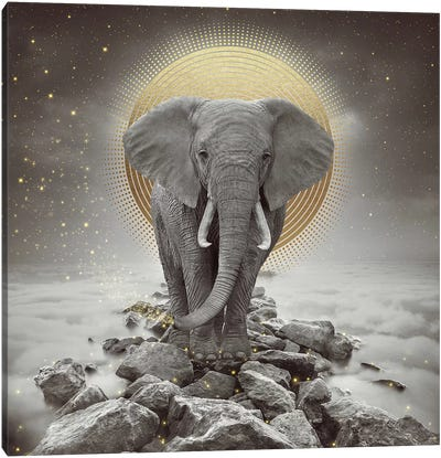 Elephant - On Rocks Stay Gold Canvas Art Print