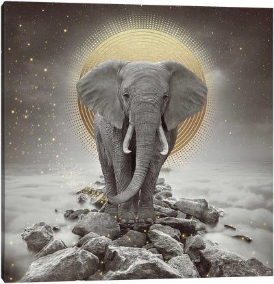 Elephant - On Rocks Stay Gold Canvas Art Print