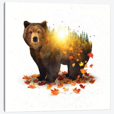 Equinox - Bear Canvas Print #SOA32} by Soaring Anchor Designs Art Print