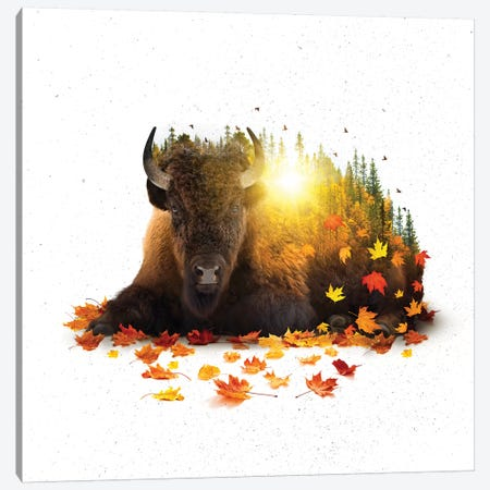 Equinox - Buffalo Canvas Print #SOA33} by Soaring Anchor Designs Art Print