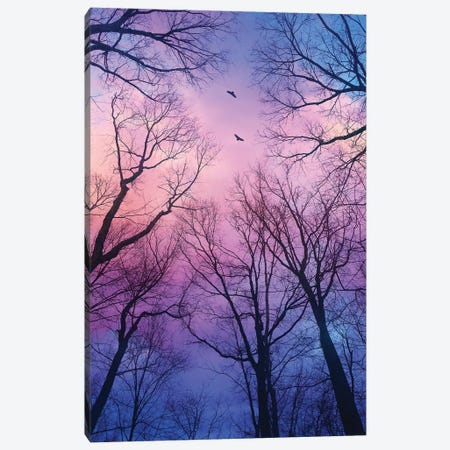 Sherbert Cloud Tree Silhouettes Canvas Print #SOA65} by Soaring Anchor Designs Canvas Art Print