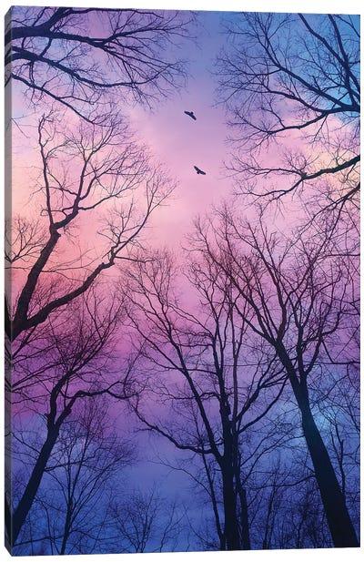 Sherbert Cloud Tree Silhouettes Canvas Art Print