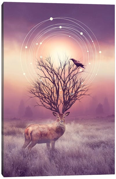 Stillness - Elk Canvas Art Print
