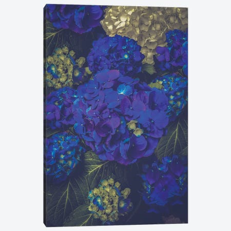 Hydrangea Bloom Blue Canvas Print #SOA88} by Soaring Anchor Designs Canvas Art