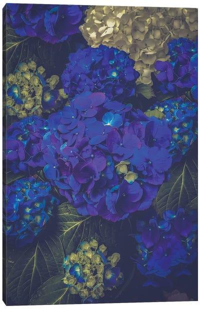 Hydrangea Bloom Blue Canvas Art Print