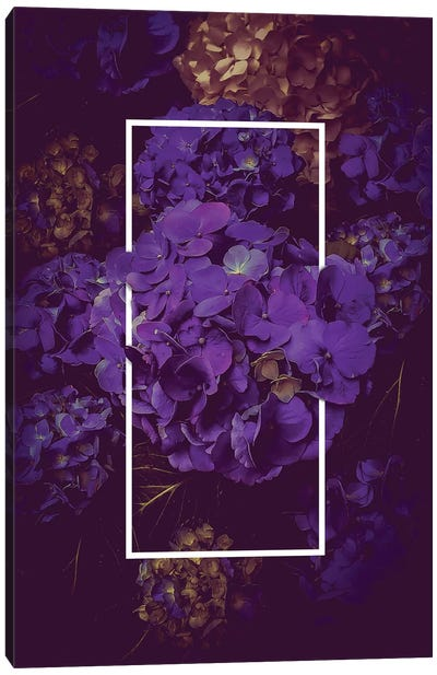 Hydrangea Bloom Dark Purple Canvas Art Print