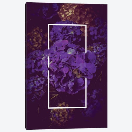 Hydrangea Bloom Dark Purple Canvas Print #SOA89} by Soaring Anchor Designs Canvas Art
