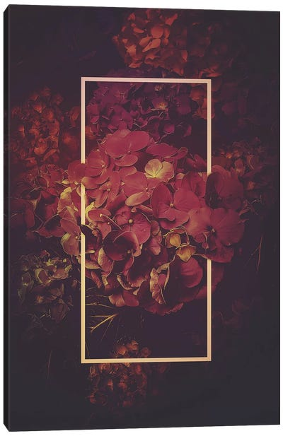 Hydrangea Bloom Vintage Rose Canvas Art Print