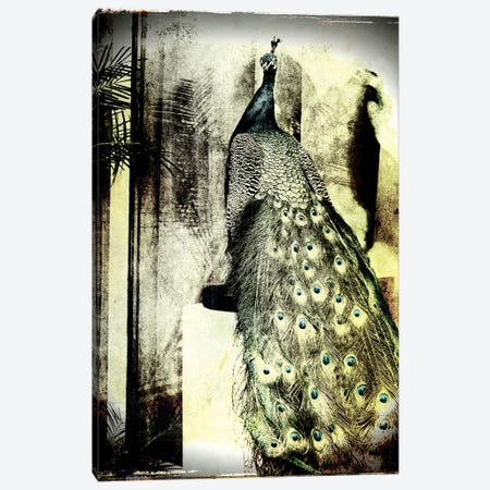 Feathers In Peace Canvas Print #SOE8} by Sophie Etchart Canvas Art