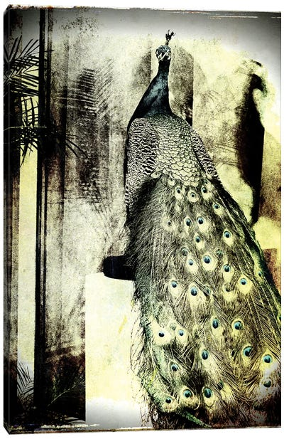 Feathers In Peace Canvas Art Print