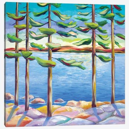 Tall Pines II Canvas Print #SPE29} by Jill Sapiente Canvas Print