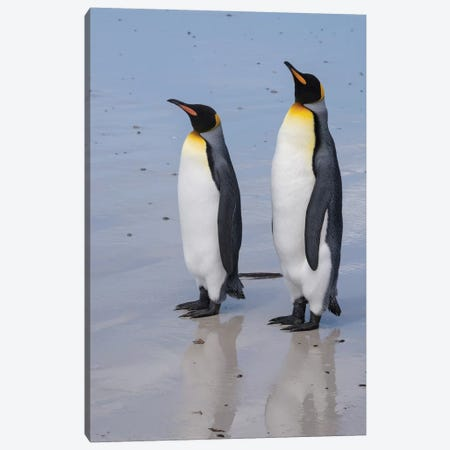 Portrait of two King penguins, Aptenodytes patagonica, on a white sandy beach. Canvas Print #SPI5} by Sergio Pitamitz Canvas Art