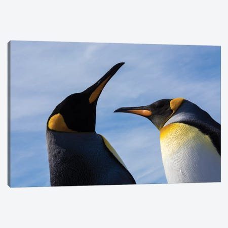 Portrait of two King penguins, Aptenodytes patagonica. Canvas Print #SPI6} by Sergio Pitamitz Canvas Wall Art