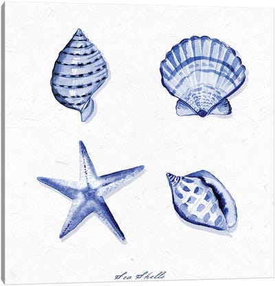 Shell Collection IV Canvas Art Print
