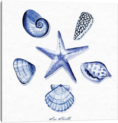 Shell Collection VI Canvas Art Print