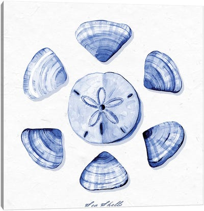 Shell Collection VII Canvas Art Print