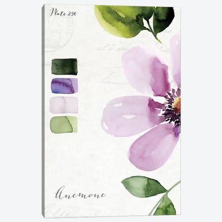 Anemone Canvas Print #SPN5} by Stephanie Ryan Canvas Art Print